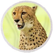 Cheetah Close-up Website Banner Round Beach Towel