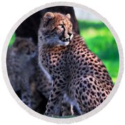 Cheetah Cub Round Beach Towel
