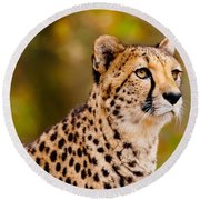 Cheetah In A Forest Round Beach Towel