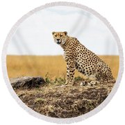 Cheetah In Africa Looking Into Camera Round Beach Towel