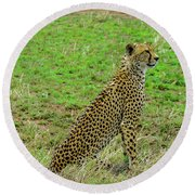 Cheetah On The Serengeti Round Beach Towel