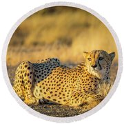 Cheetah Portrait Round Beach Towel by Inge Johnsson