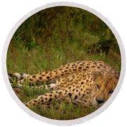 Cheetah Resting, Masai-mara Round Beach Towel