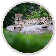 Cheetah Rests On A Rock Round Beach Towel