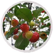 Round Beach Towel featuring the photograph Cherries In The Morning Rain by Angie Rea