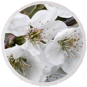 Cherry Blosoms Round Beach Towel