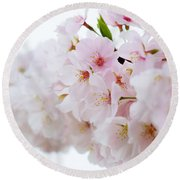 Round Beach Towel featuring the photograph Cherry Blossom Focus by Nicole Lloyd