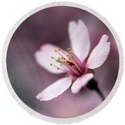Cherry Blossom Round Beach Towel by Joseph Skompski