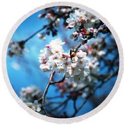 Cherry Blossoms In The Light Round Beach Towel by Rachel Mirror