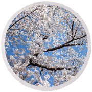 Round Beach Towel featuring the photograph Cherry Blossoms by Jean Haynes