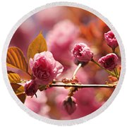 Cherry Blossoms Round Beach Towel by Judy Palkimas