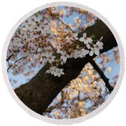 Cherry Blossoms Round Beach Towel by Megan Cohen