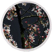 Cherry Blossoms On Dark Bkgrd Round Beach Towel