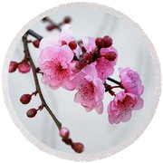 Round Beach Towel featuring the photograph Cherry White by Nicholas Blackwell