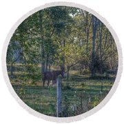 1009 - Chestnut Horse Among The Trees Round Beach Towel