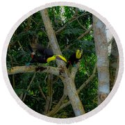 Chestnut-mandibled Toucans Round Beach Towel