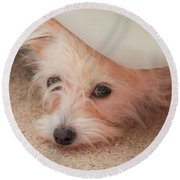 Chica In Hiding Round Beach Towel by E Faithe Lester