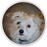 Chica On The Alert Round Beach Towel by E Faithe Lester