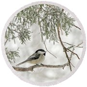 Chicadee In A Snow Storm  Round Beach Towel