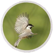 Chickadee In Flight Round Beach Towel