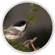 Round Beach Towel featuring the photograph Chickadee In The Shadows by Susan Capuano