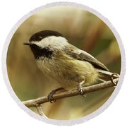 Chickadee Round Beach Towel by Loni Collins