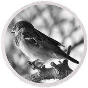 Chickadee Round Beach Towel by Sheila Ping