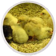 Round Beach Towel featuring the photograph Chicks by Laurel Best