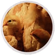 Round Beach Towel featuring the photograph Chicks by Mary Machare