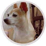 Chihuahua Chiqui Portrait 2 Round Beach Towel
