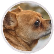 Round Beach Towel featuring the photograph Chihuahua by Debbie Stahre