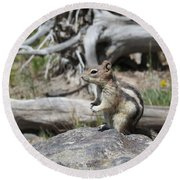 Chipmunk At Yellowstone Round Beach Towel by Ausra Huntington nee Paulauskaite