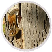 Round Beach Towel featuring the photograph Chipmunk In Fall by Rick Morgan
