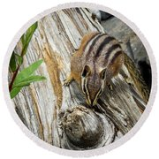 Chipmunk On A Log Round Beach Towel