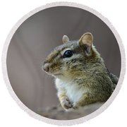 Chipmunk Profile Round Beach Towel by Andrea Silies