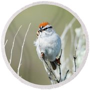 Round Beach Towel featuring the photograph Chipping Sparrow by Mike Dawson