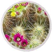 Cholla Cactus Blooms Round Beach Towel