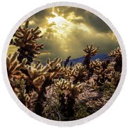 Round Beach Towel featuring the photograph Cholla Cactus Garden Bathed In Sunlight In Joshua Tree National Park by Randall Nyhof