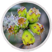 Round Beach Towel featuring the photograph Cholla Fruit S48 by Mark Myhaver
