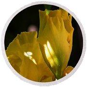 Yellow Iris Round Beach Towel by Stuart Turnbull