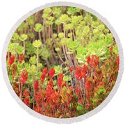 Christmas Cactii Round Beach Towel