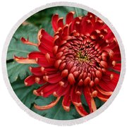 Christmas Chrysanthemum Round Beach Towel
