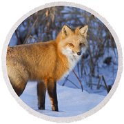 Christmas Fox Round Beach Towel by Mircea Costina Photography