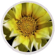 Round Beach Towel featuring the photograph Chrysanthos by Linda Lees