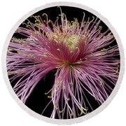 Round Beach Towel featuring the photograph Chrysanthemum 'mystic' by Ann Jacobson