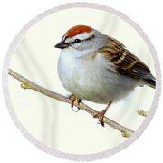 Chubby Sparrow Round Beach Towel