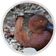 Cinnamon Teal Round Beach Towel