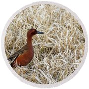 Round Beach Towel featuring the photograph Cinnamon Teal by Michael Chatt