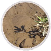 Round Beach Towel featuring the photograph Circle Shadow Plant by Marie Neder