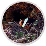 Clark's Anemonefish, Indonesia 2 Round Beach Towel